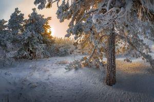 nature winter snow trees