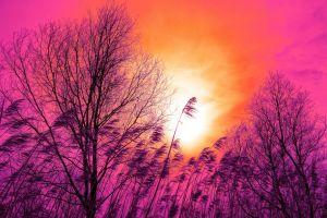 orange sunset reed grass pink sky trees