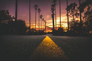 palm trees sunset asphalt landscape nature road