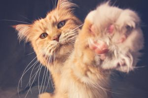 paws animals cats