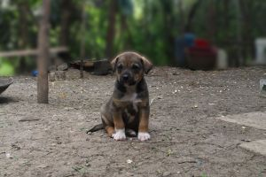 pet puppies animals photo manipulation dog gray dirt