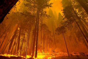photography nature fire trees forest wood wildfire