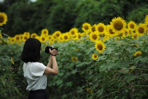 photography women outdoors camera photographer women sunflowers asian
