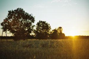 plains nature sunset field landscape