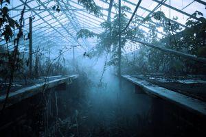 plants abandoned greenhouse mist
