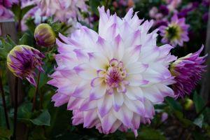plants colorful garden flowers
