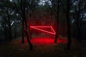 plants forest trees neon nicolas rivals laser dark triangle landscape