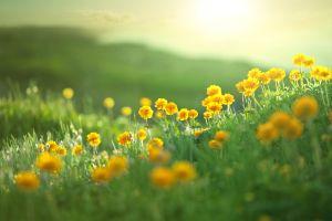 plants green grass flowers nature yellow flowers