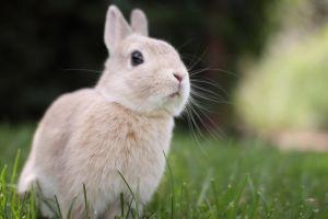rabbits nature rabbits