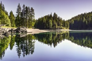 reflection forest landscape nature trees pine trees lake