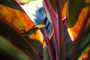 reptile silhouette animals lizards nature plants reptiles small