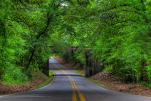 road outdoors trees plants