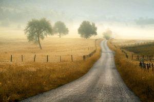 road trees landscape mist field