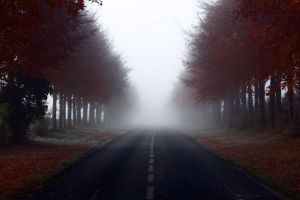 road trees mist landscape fall