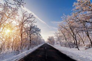 road winter trees asphalt outdoors
