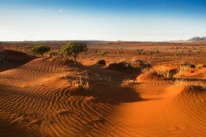 sand landscape nature desert plants
