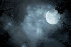 sky trees night dark moon