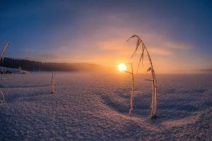 snow landscape winter nature
