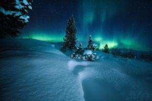 snow nature winter night