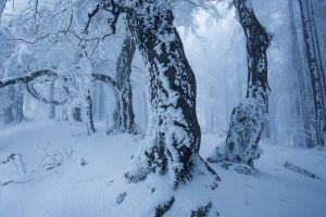 snow trees winter nature