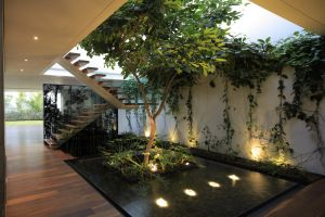 stairs plants interior modern