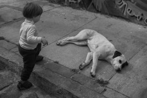 street urban urban animals children urban monochrome street dog