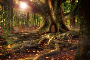 sun treehouse trees forest roots branch moss nature photoshop fallen leaves leaves door