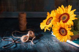 sunflowers flowers plants still life