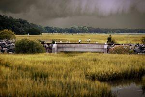 swamp nature grass birds plants overcast
