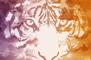 tiger face color burst