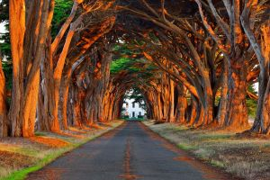 tree trunk nature path landscape plants