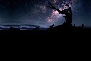 tree trunk night sky silhouette wolf