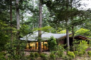 trees architecture house