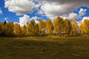 trees fall clouds sky