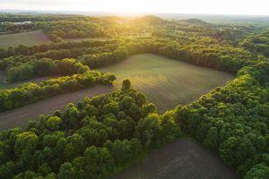 trees field landscape sunlight
