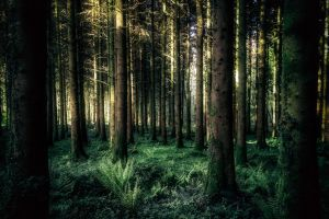 trees landscape forest grass nature wood