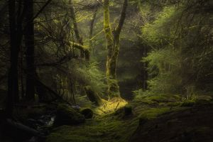 trees nature forest dark
