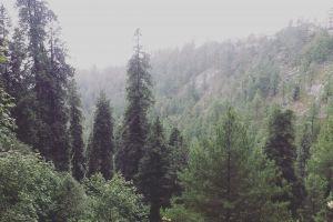 trees nature pure