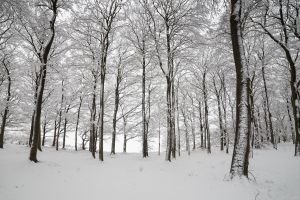 trees nature snow winter forest white