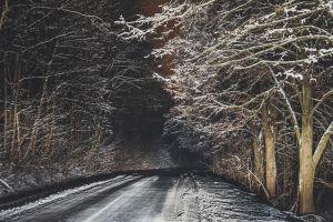 trees road night winter