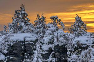 trees sunlight snow winter
