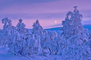 trees winter finland landscape nature