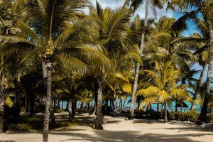tropical palm trees mauritius beach tropics trees