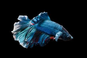 wildlife black animals underwater fish