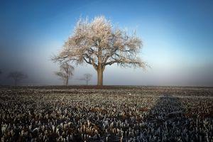 winter field trees landscape