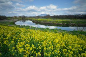 yellow flower river landscape plants flowers nature