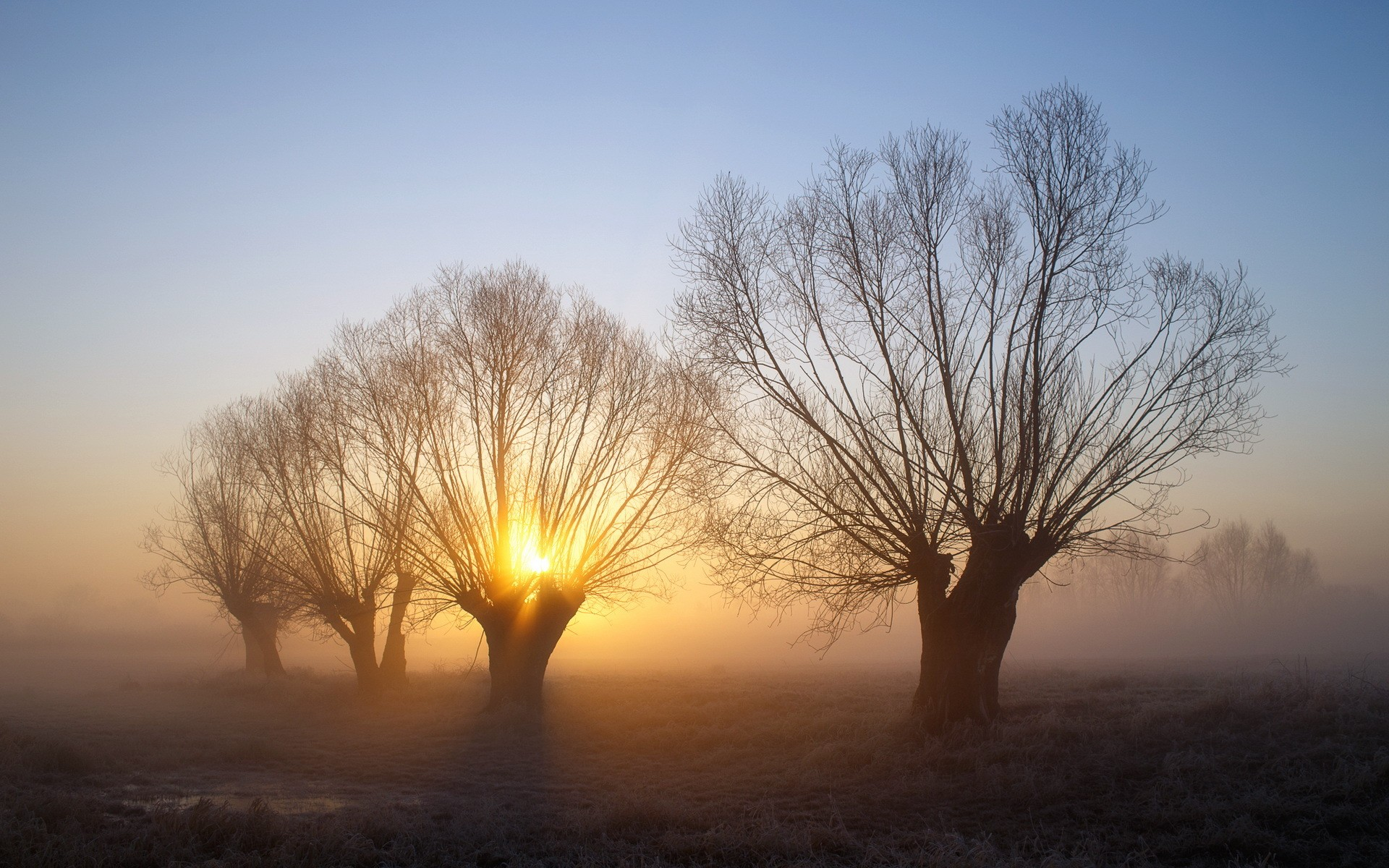 cold frost nature mist winter morning trees branch landscape