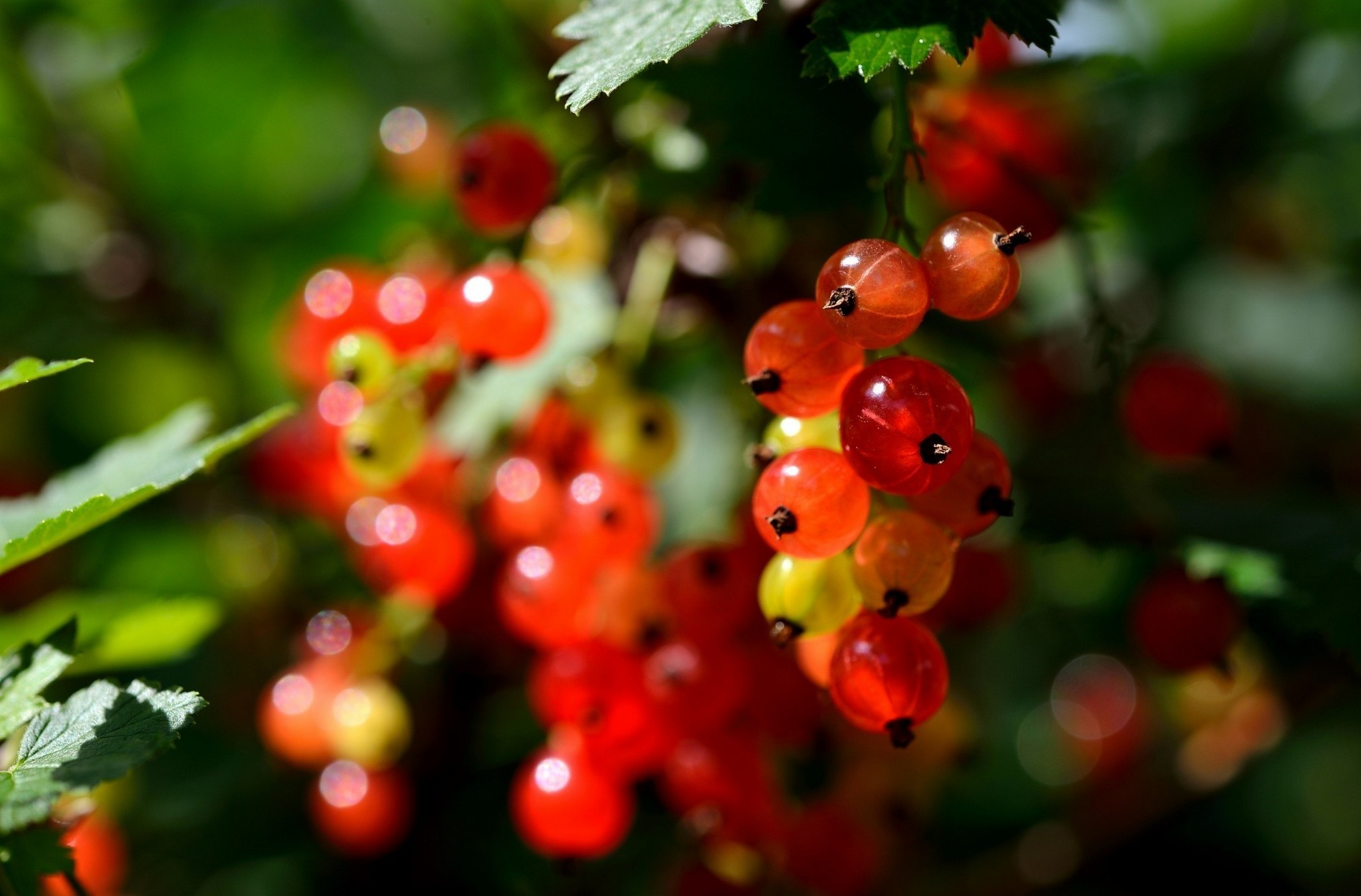 fruit plants macro