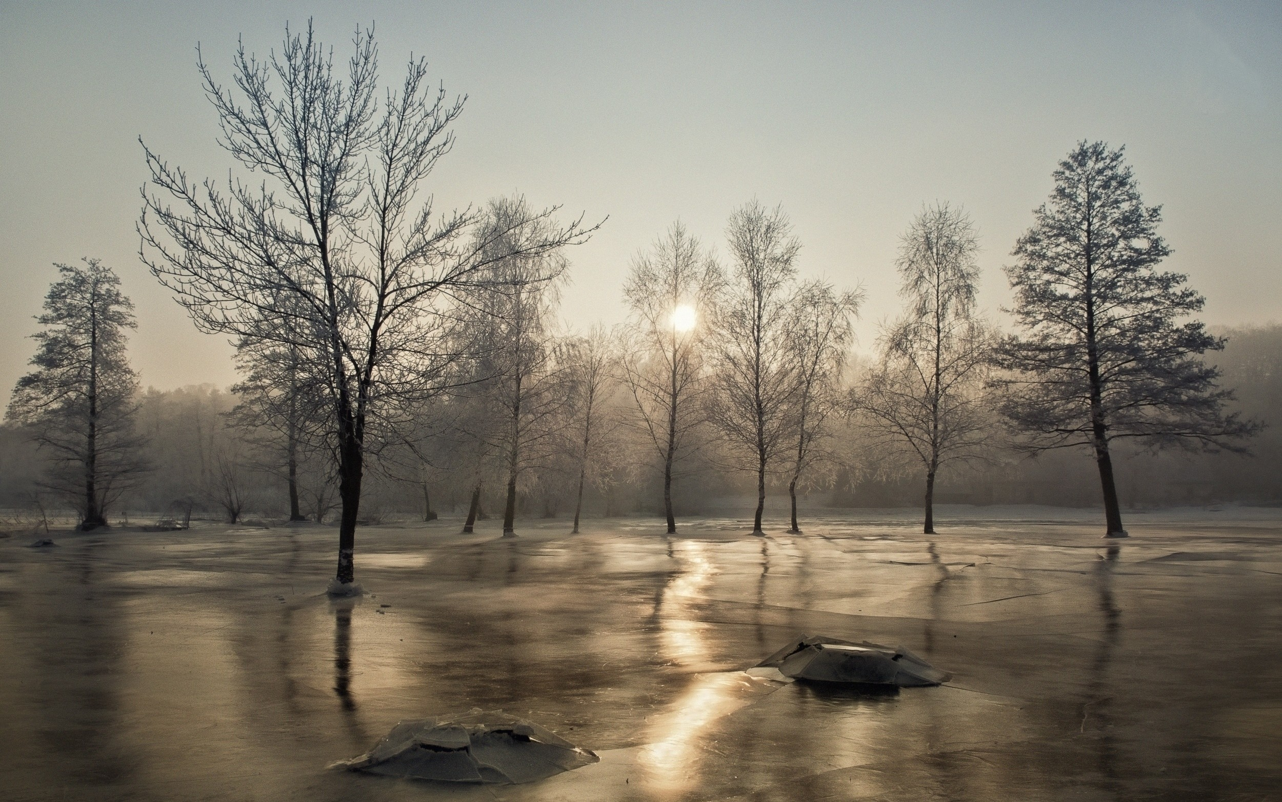 landscape cold frost mist trees morning winter ice nature