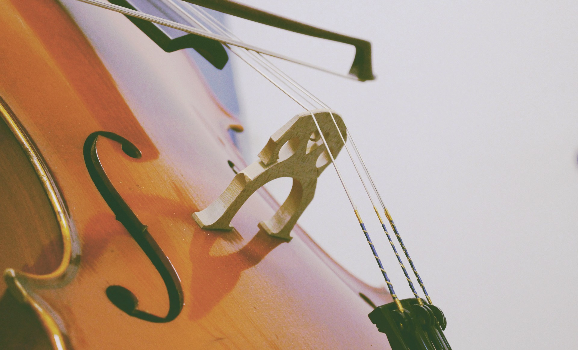 musical instrument cello photography